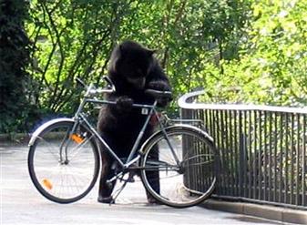 bear and bike