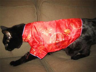 ebay cat
